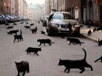 суеверия на дороге
